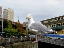 De zeemeeuw van Seattle Stock Fotografie