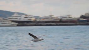 De zeemeeuw vliegt over het overzees stock video