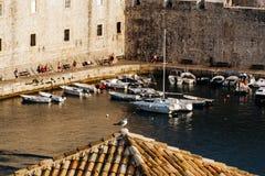 De zeemeeuw zit op een daktegel op het dak van een gebouw in de baai van de oude stad in Dubrovnik, Kroatië Royalty-vrije Stock Foto's