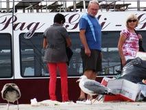 De zeemeeuwen leiden tot knoeien Stock Foto