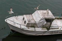De zeemeeuwen nemen een over abondend vuil schip royalty-vrije stock foto's
