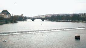 De zeemeeuwen stijgen over Vltava stock footage