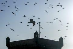De zeemeeuwen vliegen over een toren die een deel van de havenvesting in Essaouira in Marokko vormde Royalty-vrije Stock Foto