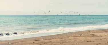 De zeemeeuwen vliegen over het overzees Royalty-vrije Stock Fotografie