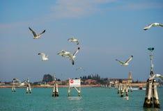 De zeemeeuwen volgen een vaporetto in Venetië Stock Fotografie