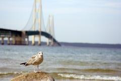 De zeemeeuwlandschap van de brug Stock Fotografie