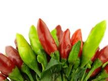 Zeer dichte Spaanse peperpeper en hete Spaanse peper stock fotografie