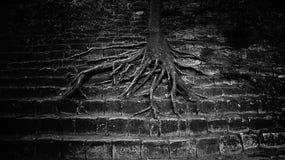 De zeer grote boomwortels spreiden uit op de concrete stappen uit onverbiddelijk mooi beeld conceptentriomf van aard over mens stock afbeeldingen