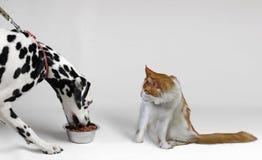 De zeer hongerige hond eet dalmatian royalty-vrije stock afbeelding