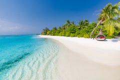 De Zeeschelp van de kammossel op Roze Mooi strandlandschap Tropische aardscène Palmen en blauwe hemel De zomervakantie en vakanti stock foto's