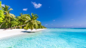 De Zeeschelp van de kammossel op Roze Mooi strandlandschap Tropische aardscène Palmen en blauwe hemel De zomervakantie en vakanti royalty-vrije stock foto