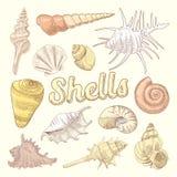 De zeeschelpen overhandigen Getrokken Aquatische Krabbel Marine Sea Shell Isolated Collection Stock Foto's