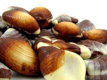 De Zeeschelpen van de chocolade Royalty-vrije Stock Foto's