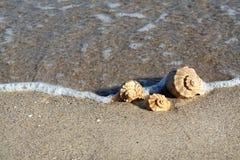 De Zeeschelpen van het strand stock afbeeldingen
