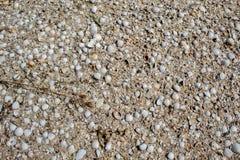 De zeeschelpen van verschillende kleuren en grootte, liggen op het zand royalty-vrije stock afbeeldingen