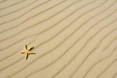 De zeester op zand Royalty-vrije Stock Afbeelding