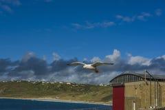 De zeevogel die sennen over inhamgolfbreker vliegen Stock Afbeelding