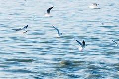 De zeevogels van zeemeeuwen vliegen een grote troep laag over golven van water in het overzees Gestemd in stijl van instagram lic Stock Foto's