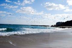 De zeevogels vliegen over het water Stock Foto