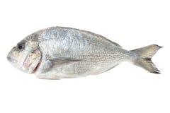De zeevruchten van Dorada die op wit worden geïsoleerdr. De vissen van de brasem. Royalty-vrije Stock Foto