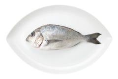 De zeevruchten van Dorada op een witte ovale schotel. De vissen van de brasem. Stock Afbeelding