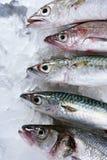 De zeevruchten van vissen over ijs Royalty-vrije Stock Foto