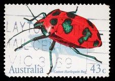De zegel in Australië wordt gedrukt toont Katoenen Harlekijninsect dat Royalty-vrije Stock Foto's