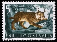 De zegel die in Joegoslavië wordt gedrukt toont de Lynx stock foto's