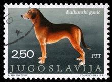 De zegel die in Joegoslavië wordt gedrukt toont de Servische Hond stock afbeelding