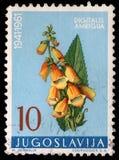 De zegel die in Joegoslavië wordt gedrukt toont gele digitalis royalty-vrije stock foto's