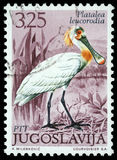 De zegel in Joegoslavië wordt gedrukt dat toont Europees-Aziatische Spoonbill stock afbeelding