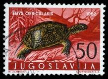 De zegel in Joegoslavië wordt gedrukt toont de Europese vijverschildpad die stock foto's