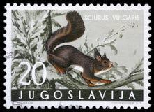 De zegel in Joegoslavië wordt gedrukt toont de rode eekhoorn die stock foto