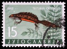De zegel in Joegoslavië wordt gedrukt toont Triturus die stock foto