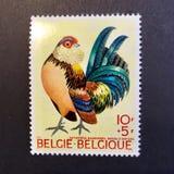 De zegel van België stock foto's