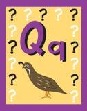 De zelfstandige naamwoorden van de Brief Q van de Kaart van de flits. Stock Afbeelding
