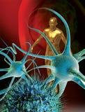 De zenuwcellen van hersenen Stock Foto's
