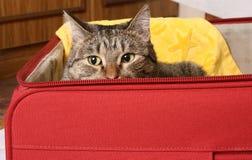 De zetel in een koffer zal me ook voldoende zijn Stock Foto