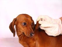 De zieke hond royalty-vrije stock afbeeldingen