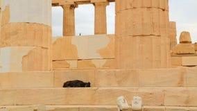 De zieke slaap van de mengen-rassenhond op treden van de oude bouw, verdwaalde dieren in steden stock videobeelden