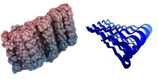 De ziekteamyloid van Alzheimer bètapeptide (1-42) Royalty-vrije Stock Afbeeldingen