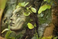 De ziel van de boom Stock Foto's