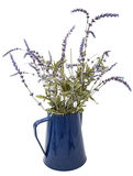 De zijdeheide bloeit geïsoleerde koffiepot Stock Afbeelding
