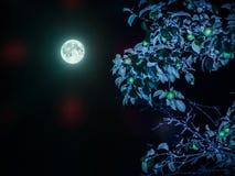 De zilveren appelen van de maan, de gouden appelen van de zon stock foto
