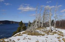 De zilveren toneelkustlijn van de mijnsleep van Newfoundland dichtbij Torbay Newfoundland Stock Foto's