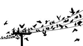 De zitstok van de vogel royalty-vrije illustratie