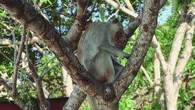 De zitting van de aap op boom stock videobeelden
