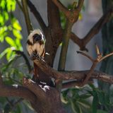 De zitting van aaptamarin op een boom Royalty-vrije Stock Fotografie