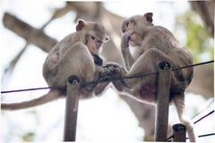 de zitting van de apenfamilie samen op zwarte draad stock foto's