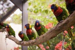 De zitting van de aravogel op de toppositie Mooie kleurrijke papegaaien die op login exotische tuin zitten stock afbeelding